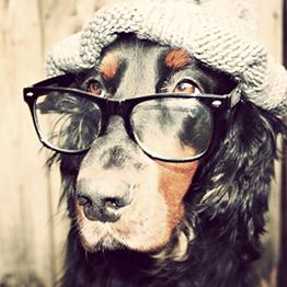 Optik Högl - Hund